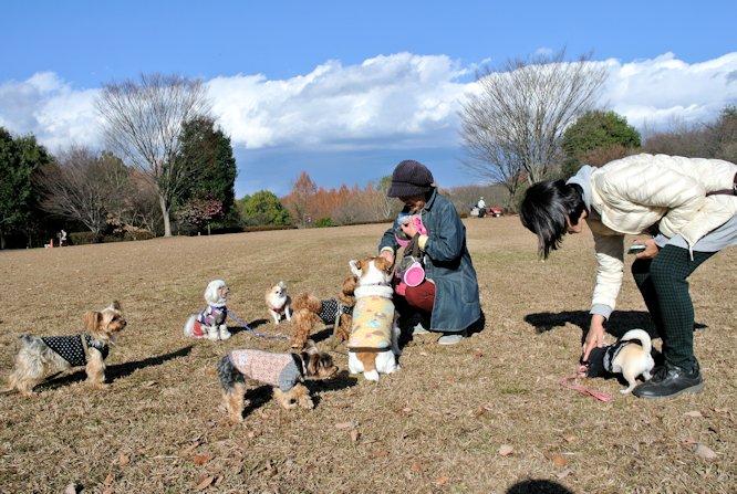 2015長岡公園0979
