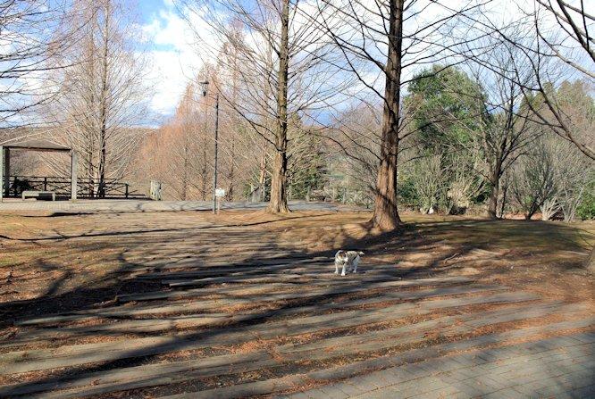2015長岡公園0982