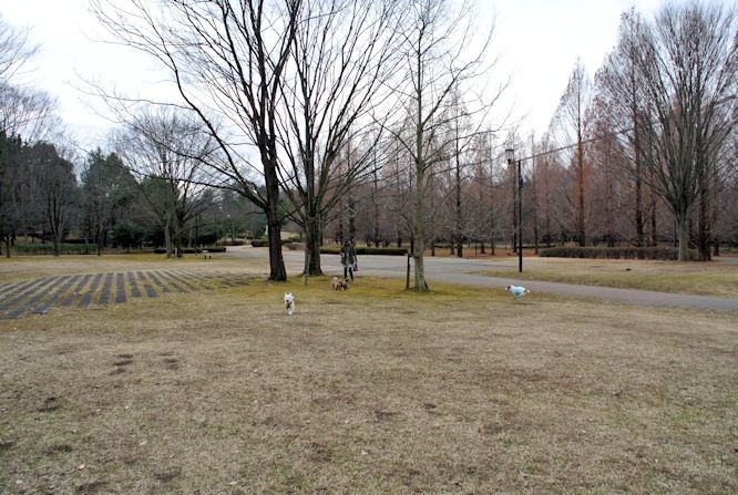 2015長岡公園0990
