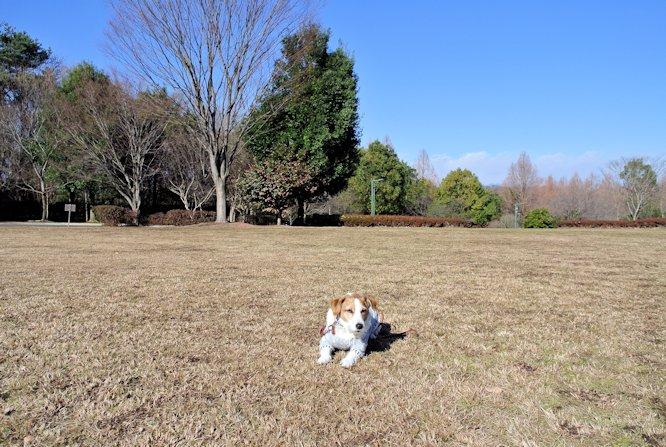 2015長岡公園1004