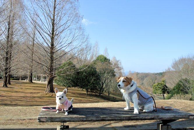 2016長岡公園0009