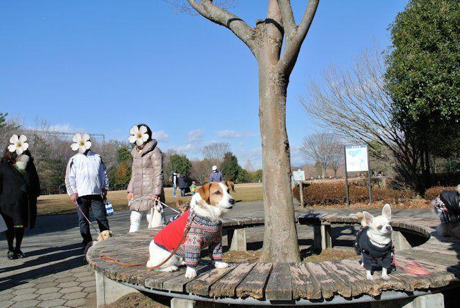 2016長岡公園0043