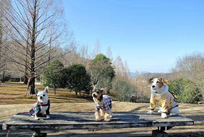 2016長岡公園0048