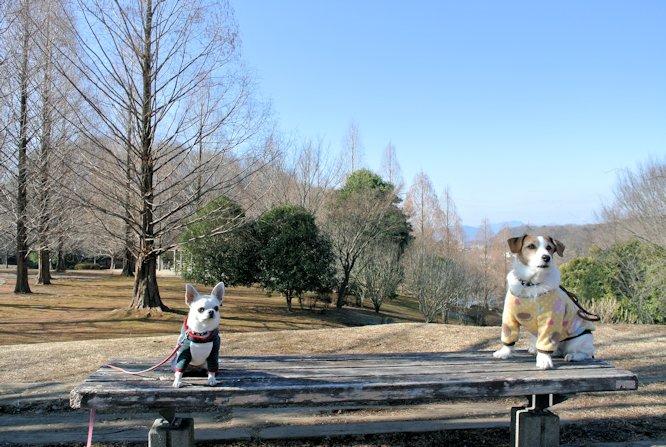 2016長岡公園0049