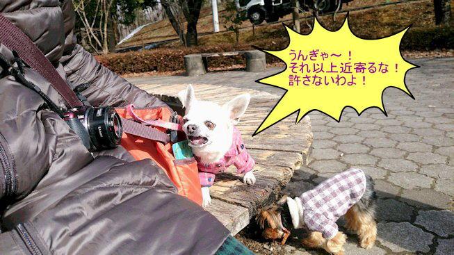 2016長岡公園0074