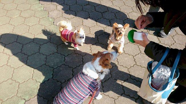 2016長岡公園0082