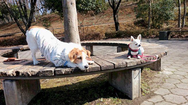 2016長岡公園0128