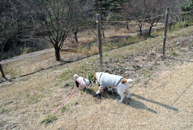 2016長岡公園0136