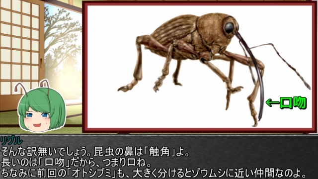ゆっくり霊夢とやる夫が学ぶ 昆虫大百科 part27