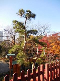 tsukimatsu.jpg