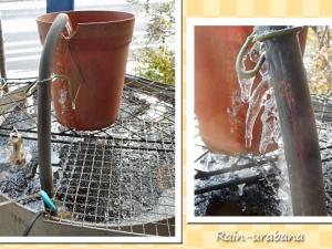 フナの寸胴鍋池もガチガチ