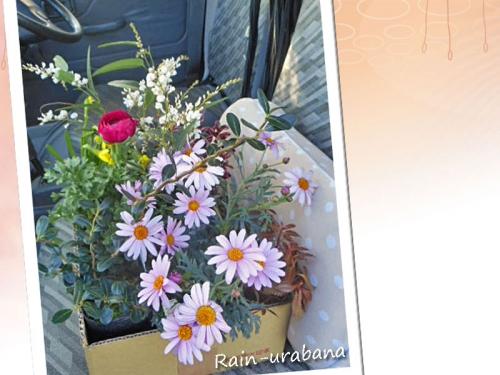 寄せ植え用の花たちを購入♪