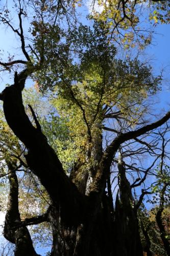 0Y6A5414原生林の紅葉