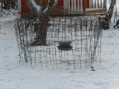鳥の餌セット