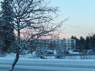 雪の積もった木と夕焼