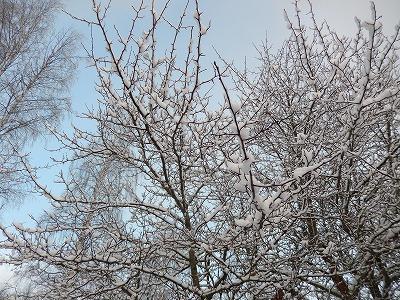 空に伸びる木