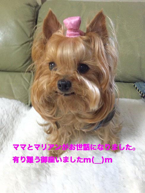 IMG_5279ab.jpg