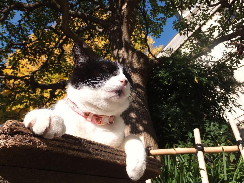 ベンチとクスノキの下の猫1