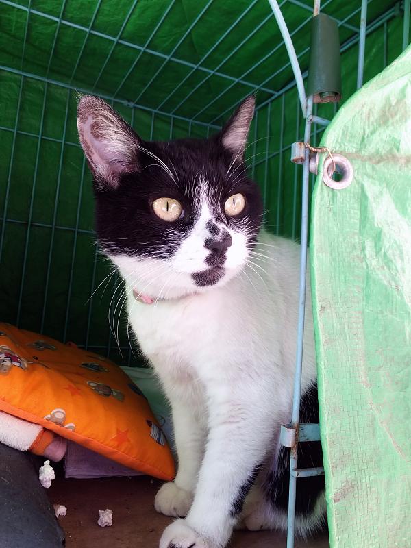 ハウスの中から見てる猫1
