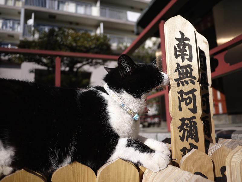 卒塔婆で欠伸する黒白猫