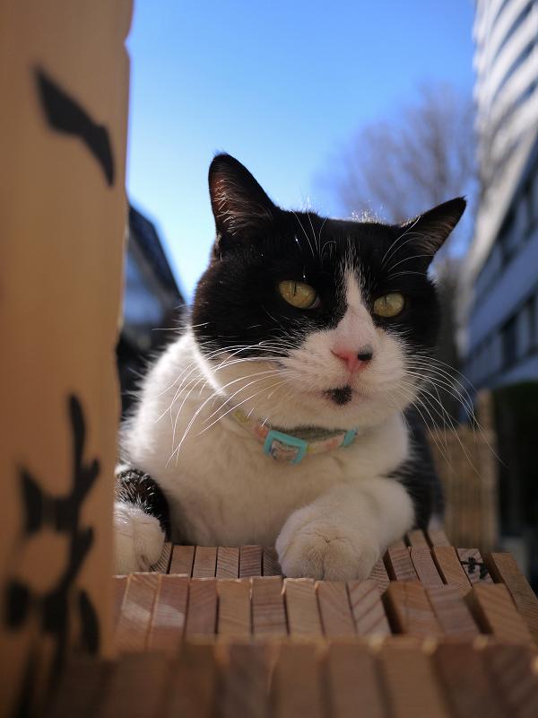 青空と卒塔婆の黒白猫1
