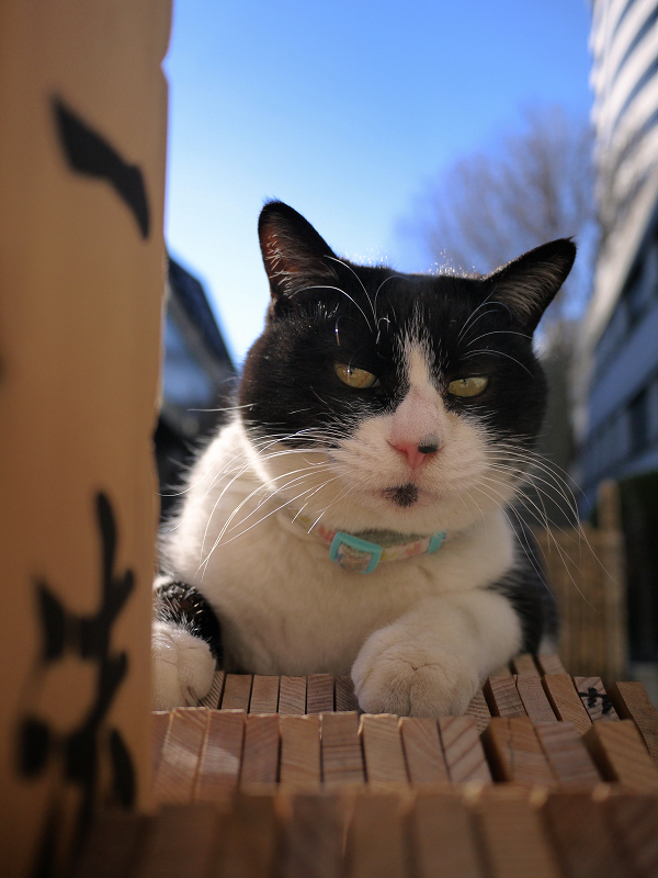 青空と卒塔婆の黒白猫2