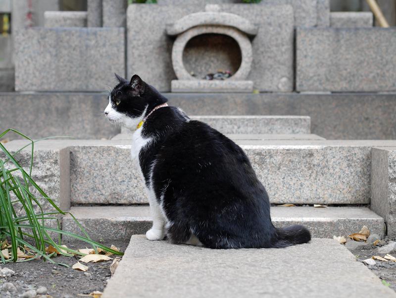 境内でベロを出す黒白猫1