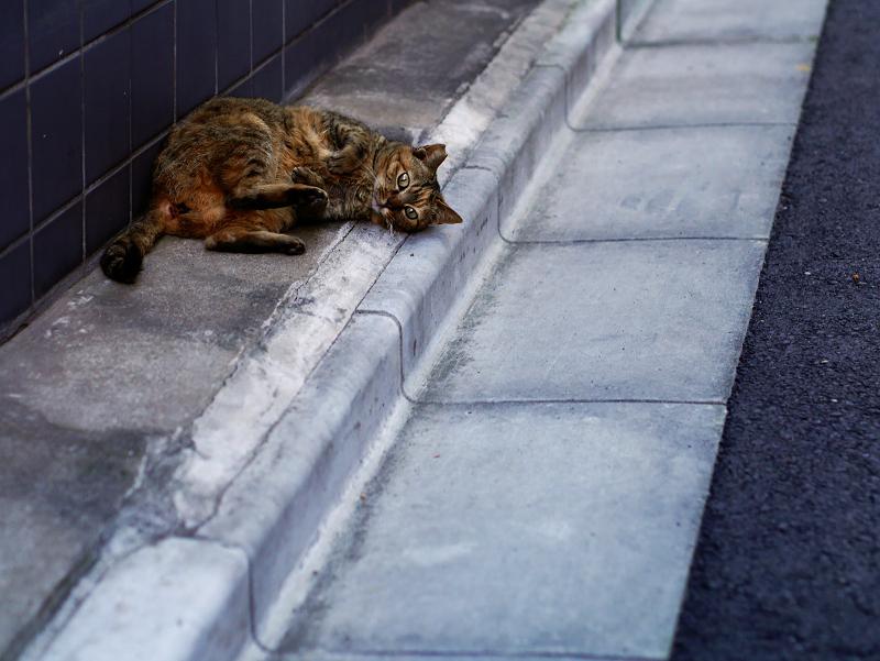 路地で転がるサビ柄猫1