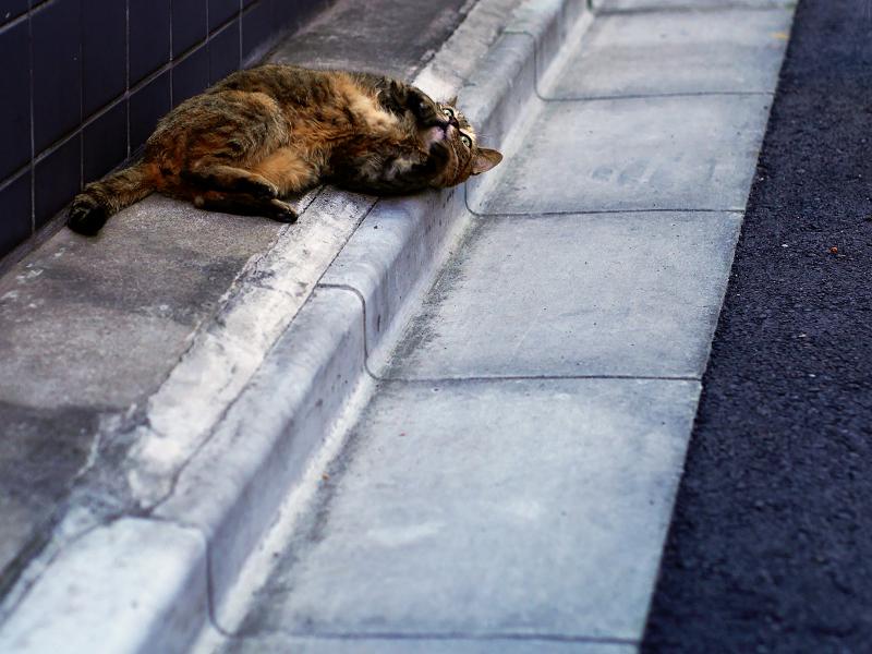 路地で転がるサビ柄猫2