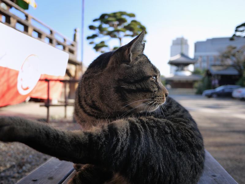 体を捻ってるキジトラ猫