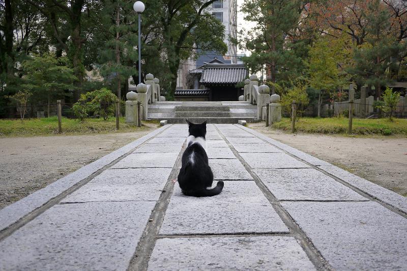 石参道の猫1