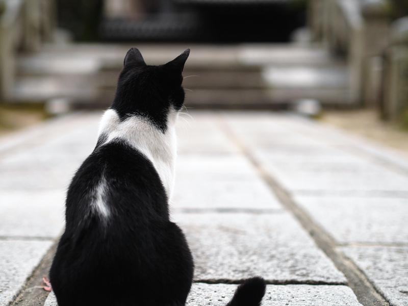 石参道の猫2