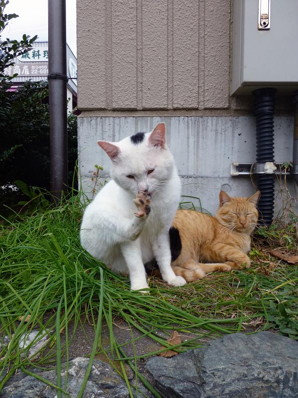 足の指を開いてる白黒猫1