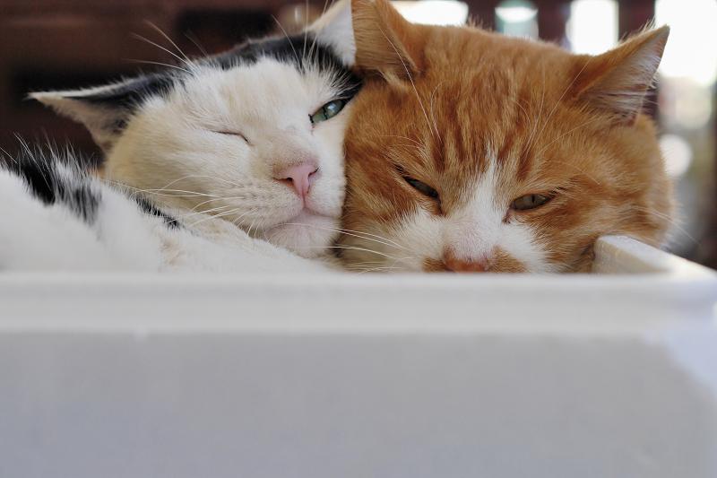 発泡スチロール箱の猫たち2