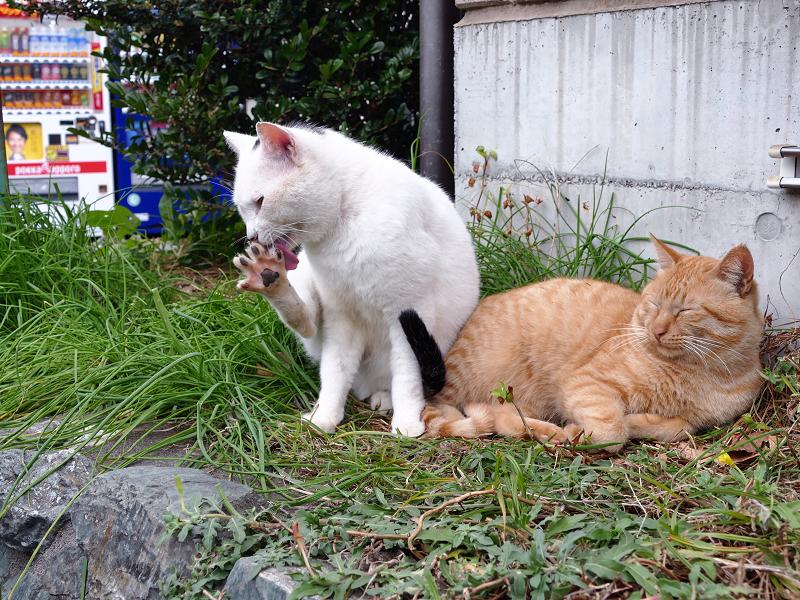 足の指を開いてる白黒猫3