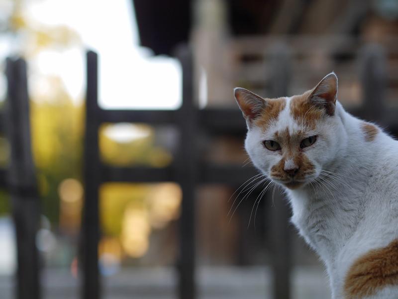お寺の友だち猫1