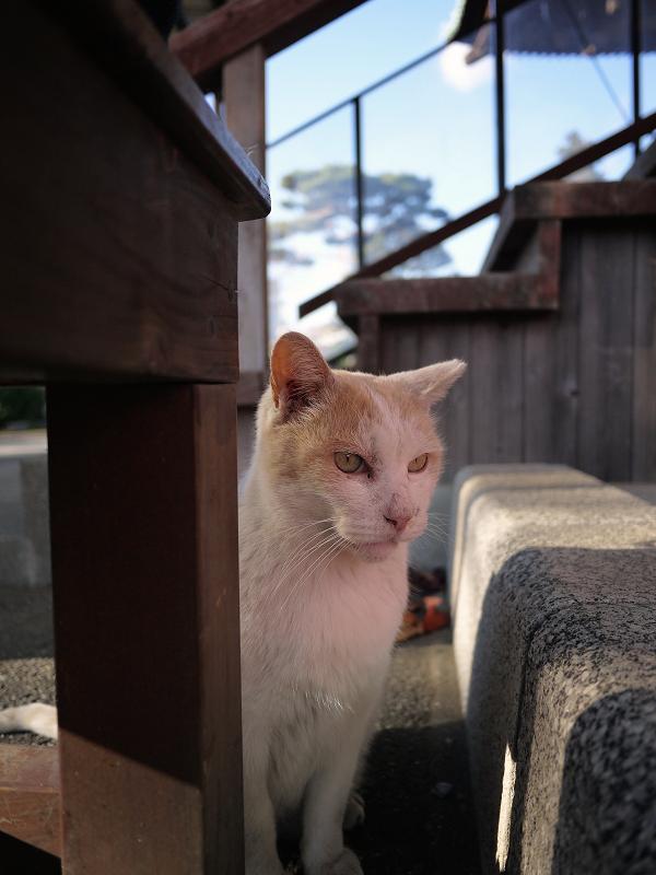 男前の友だち猫1