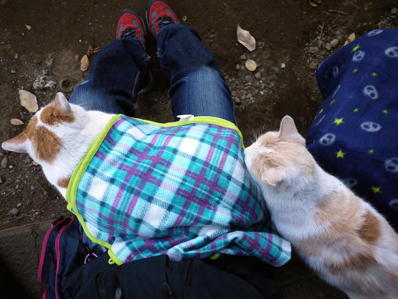 膝に乗った猫膝に乗りたい猫