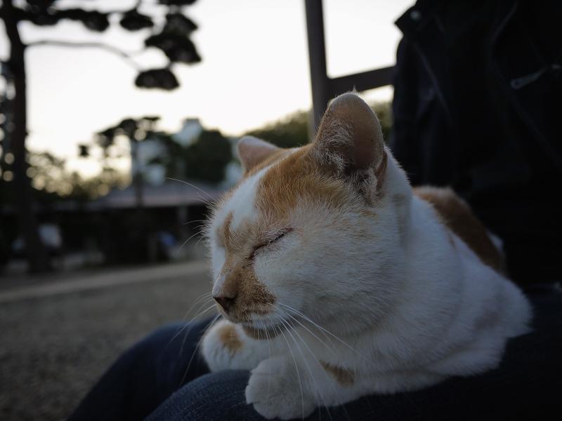 お寺の友だち猫2