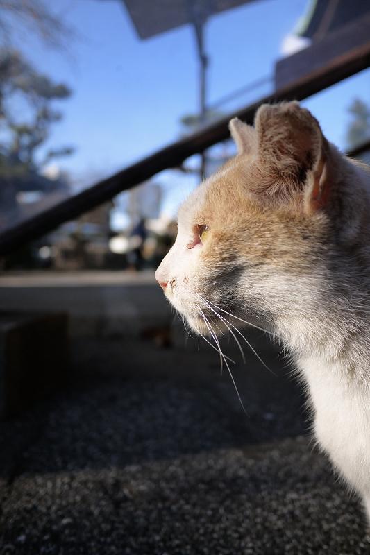 男前の友だち猫2