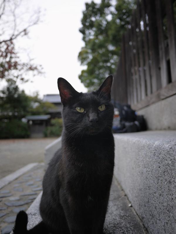 お寺の黒猫1