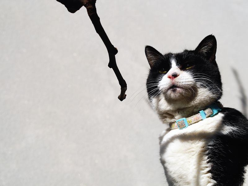 冬陽射しと小枝と猫2