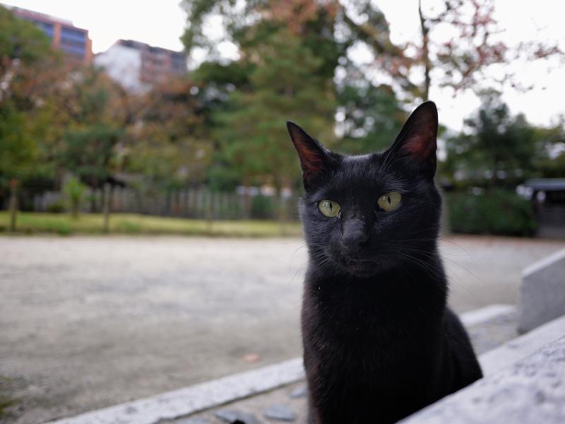 お寺の黒猫2