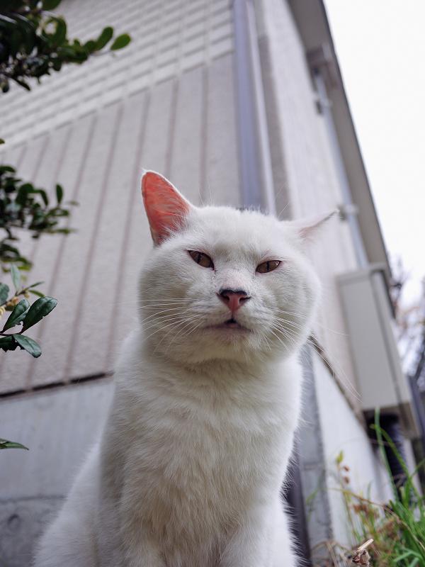 モヒカン猫をローアングルで