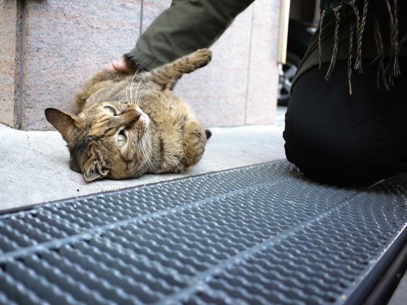 ガレージ前で転がるサビ猫