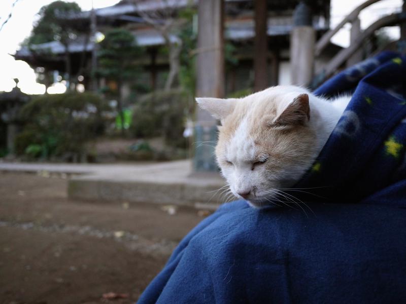 フリースでくるまる茶白猫