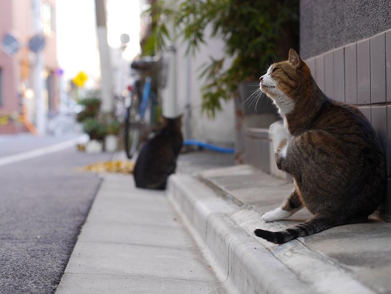 下町の路地と猫1