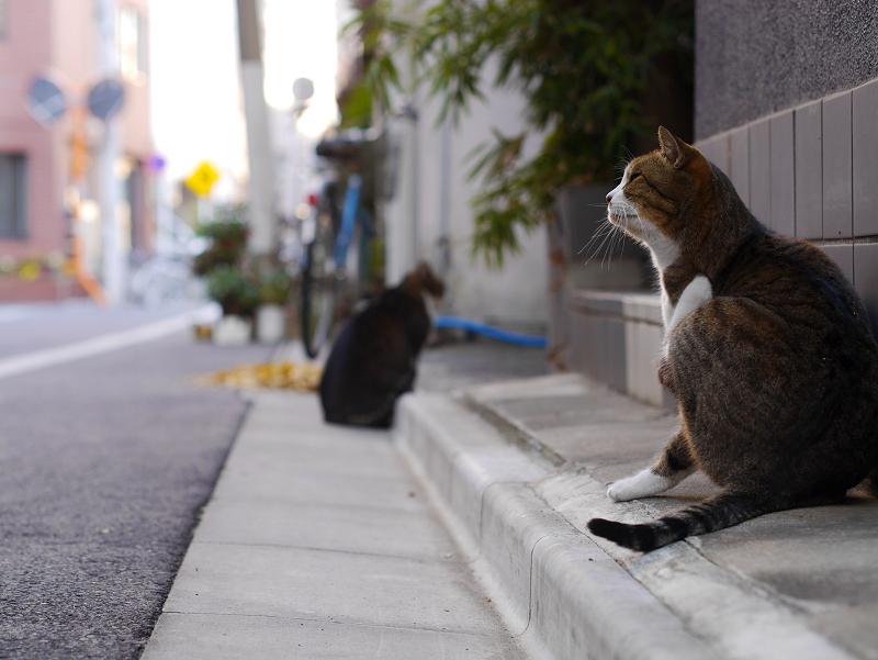 下町の路地と猫2