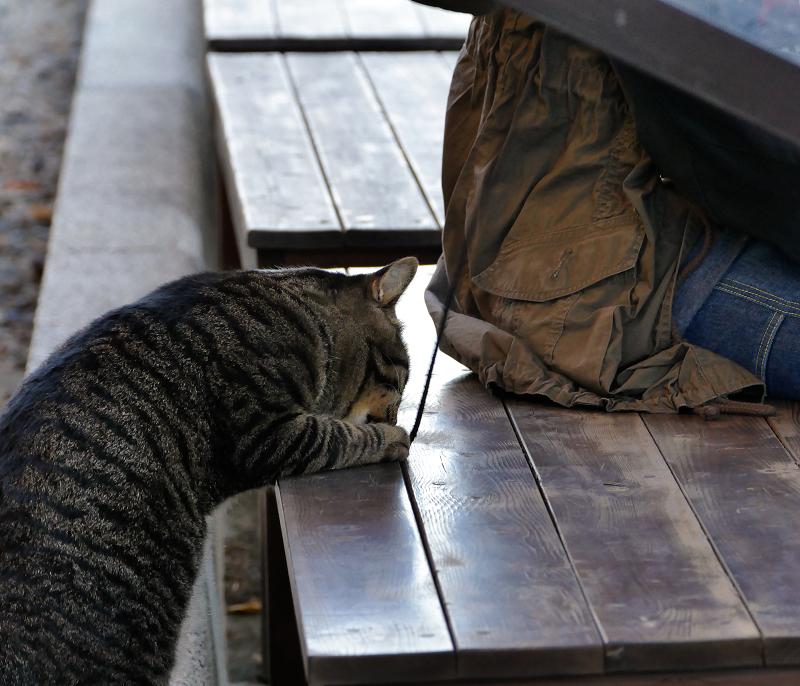 木製ベンチでゴム紐で遊ぶ猫