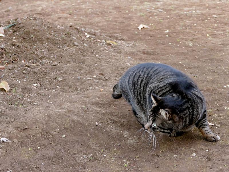 境内を走り回るキジトラ猫2